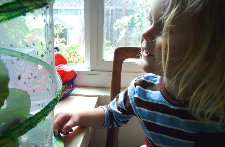 A boy smiles at his ladybug habitat.