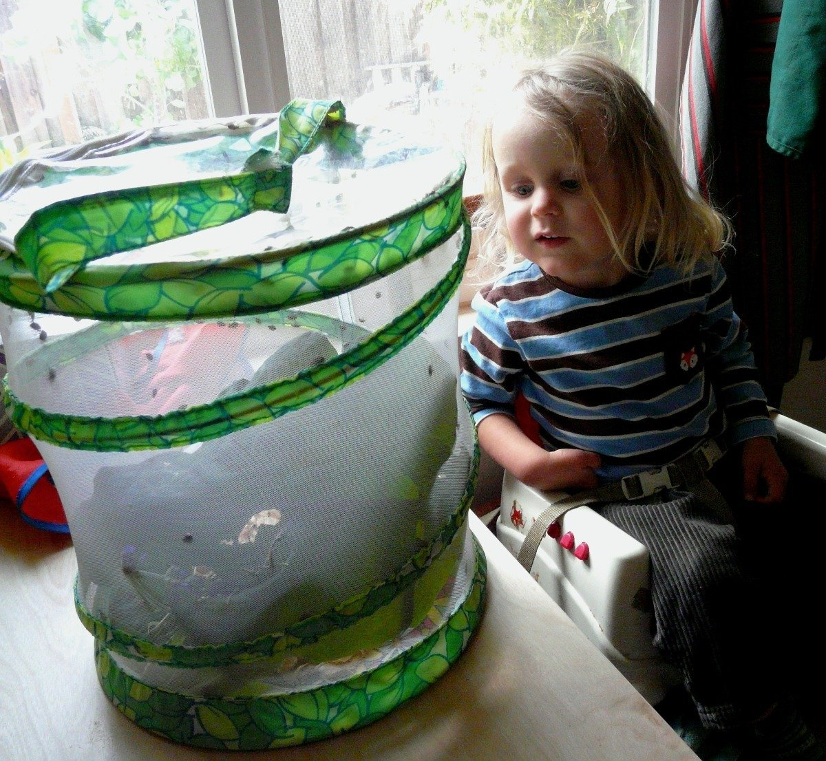a child looks at a diy ladybug habitat