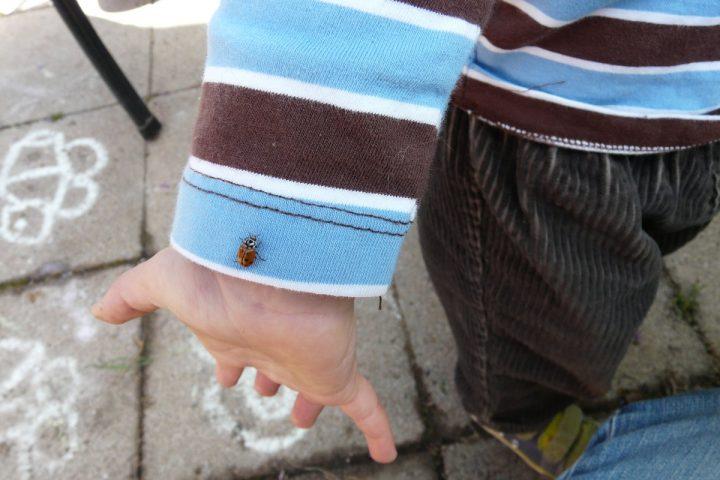 a boy holds a ladybug