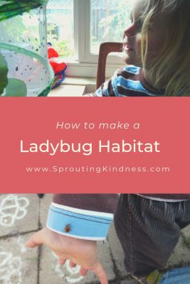 how to make a ladybug habitat