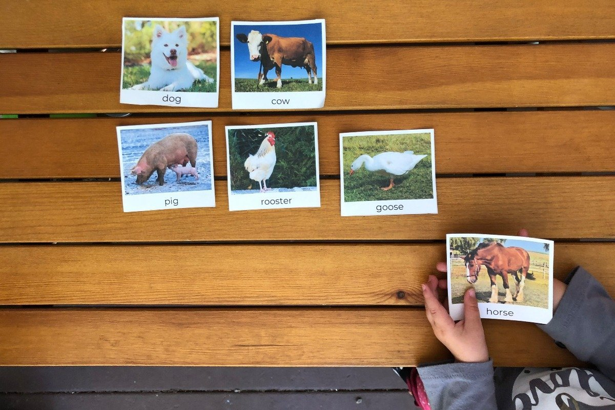 a child plays with farm animal picture cards